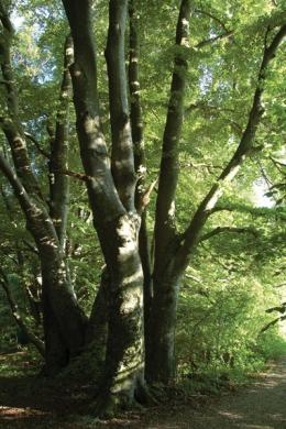 100-jährige Stadt / 100-jährige Bäume